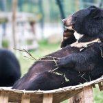 Bear Sanctuary, Laos vacation