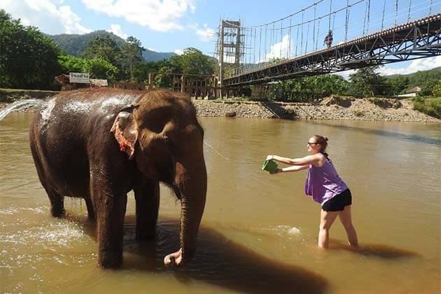 Elephant Bathing in Laos, Laos Trips