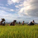 Living land Farm, Laos Local Tours