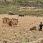Working on fields in Xieng Khouang, Laos Tour