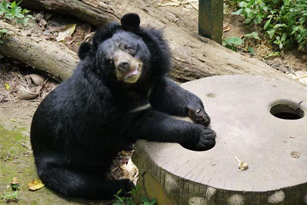Bear Sanctuary, Laos Trips