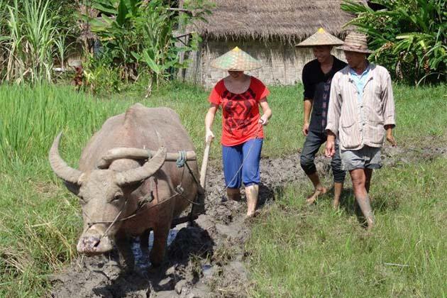 Living-Land-Farm in Laos