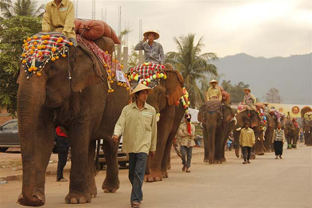 Elephant Festival in Laos, Laos Tours