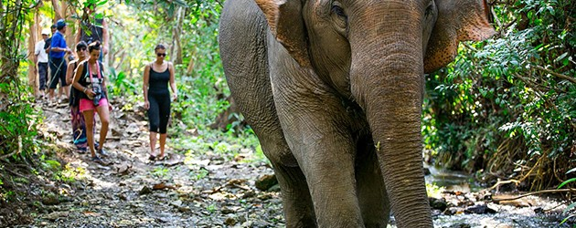 Elephant is considered national animal of Laos