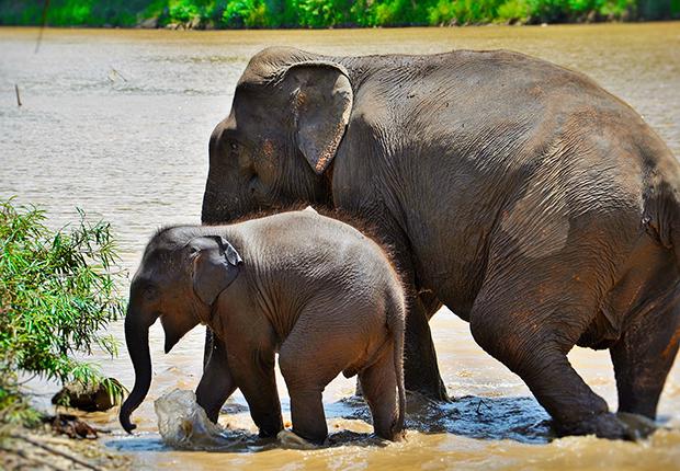 Elephant village, Laos Tours