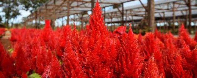 Mon Ta Champa Lao Garden