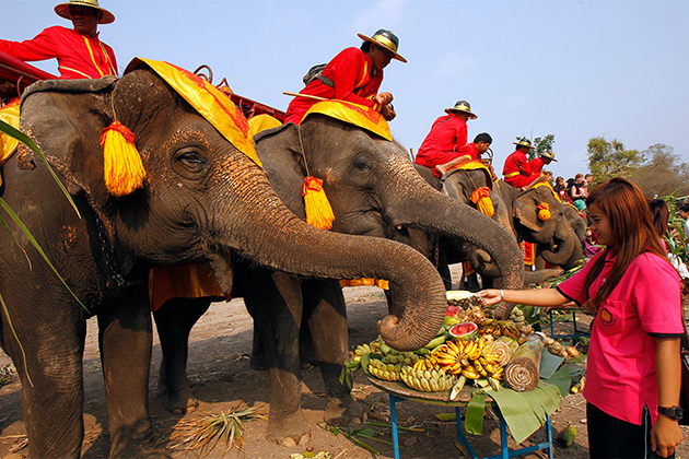 One of the activities during the elephant festival in Laos