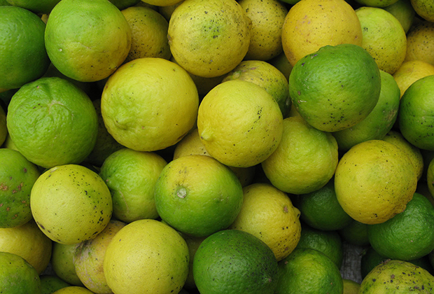Orange-limes sold in the market