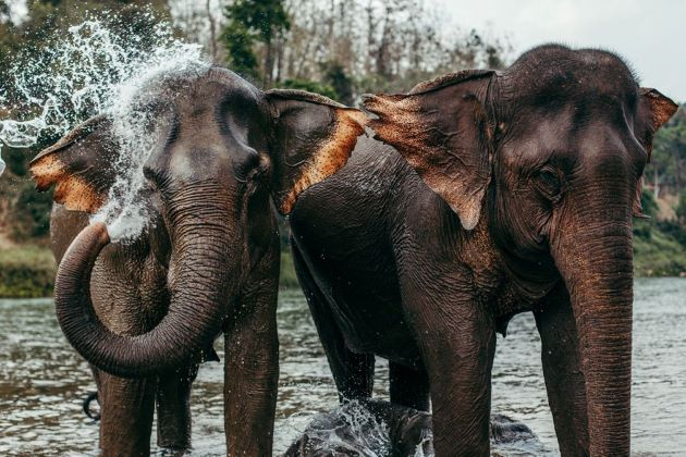 elephant national animal in laos