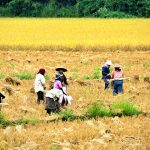 Villagers in the field of Muang keo Village, Laos Trip