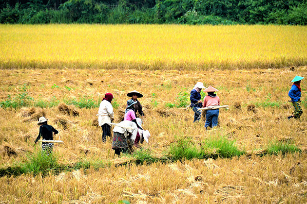 Villagers in the field of Muangkeo, Laos trips