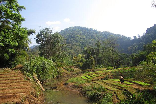 Bolaven-Plateau-Highland, teavel in Laos