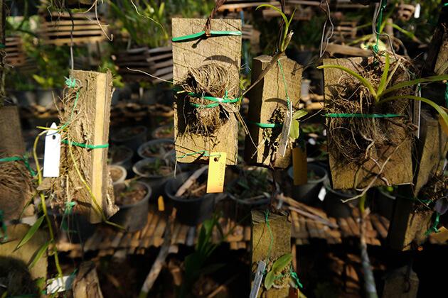 Pha-Tad-Ke-Botanical-Garden, Luang Prabang Tour