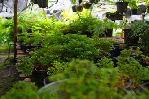 Pha-Tad-Ke-Botanical-Garden-in-Laos, Laos Packages