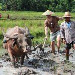 luanLuang Prabang rice experience, Laos Trips g-prabang-rice-experience-laos-tours