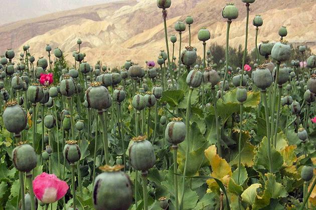 opium in laos
