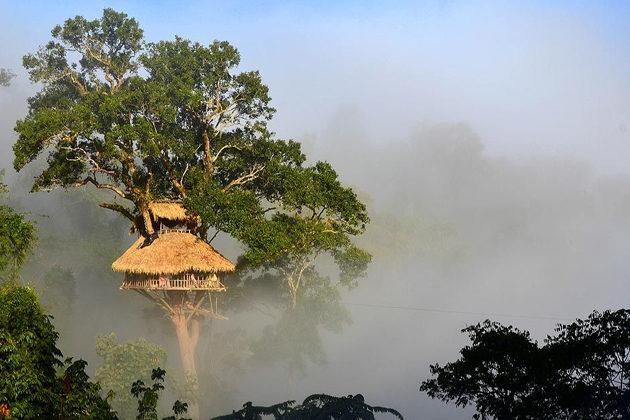gibbon experience The Best Things to Do and See in Huay Xai laos tours