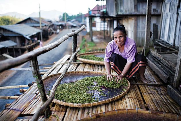 laos tea production