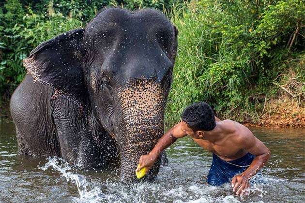 joyful time with Laos elephants, Tour in Laos