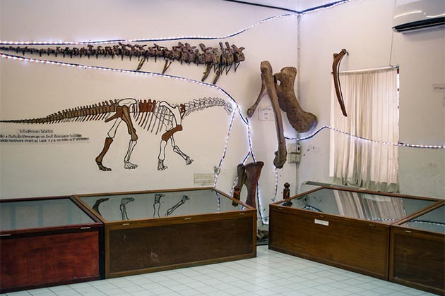Things to See in Dinosaur Museum