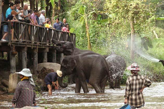 Elephant Camp, Luang Prabang local tour