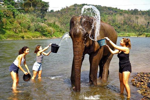 Elephant Village Camp, Tour Packages in Laos