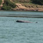 Irrawaddy Mekong Dolphin, Laos tours