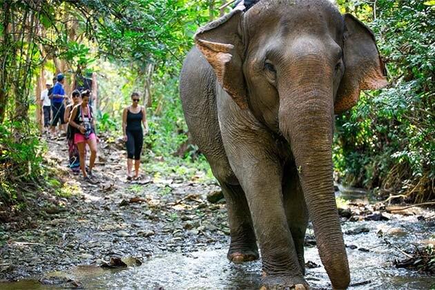 MandaLao Elephant Sanctuary in Luang Prabang, Laos Adventure Tours
