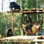 Kuang Si Bear Rescue , Laos Tour Vacations