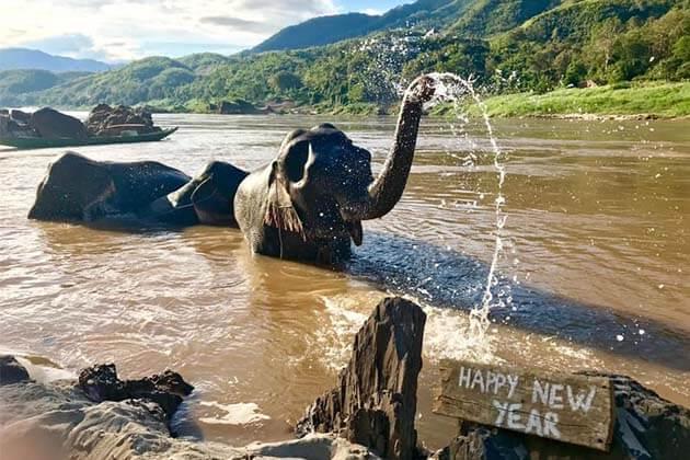 Mekong Elephant Park Sanctuary, Laos luxury tour