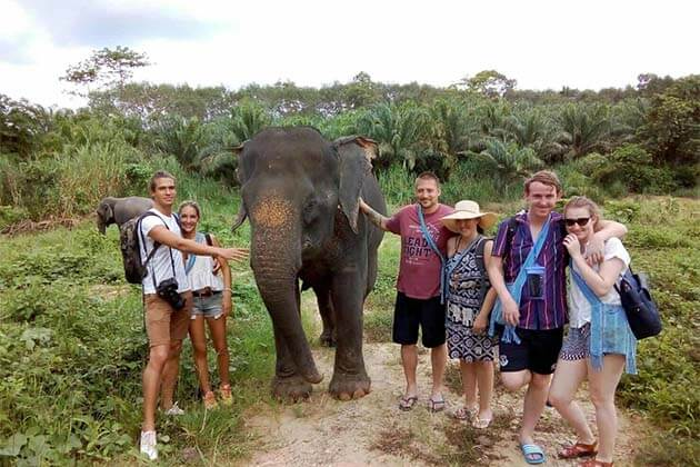 Elephants in Sayaboury, Family in Laos Tours