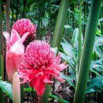 Pha Tad Ke Garden, Laos adventure tours